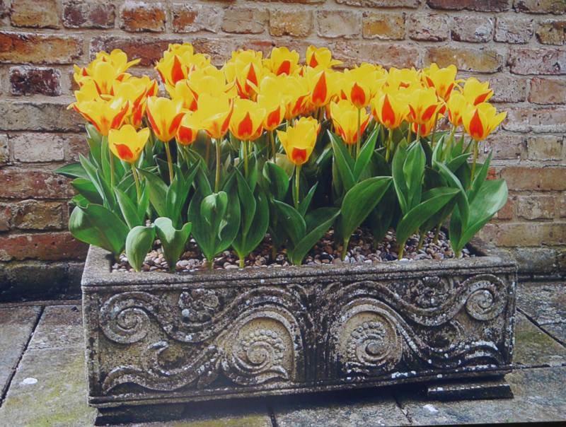 Sresa yellow red tulip bulb rockery early spring containers cheap near me